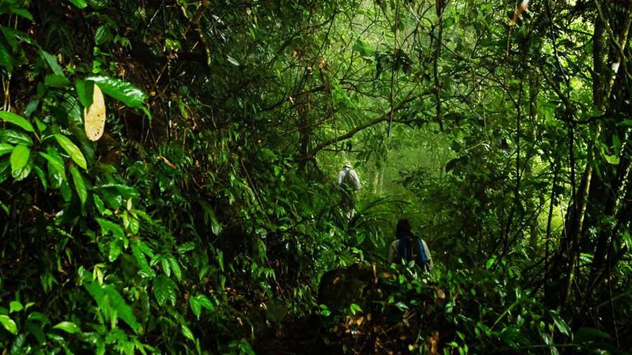 Hành trình khám phá Vườn Quốc Gia Tam Đảo