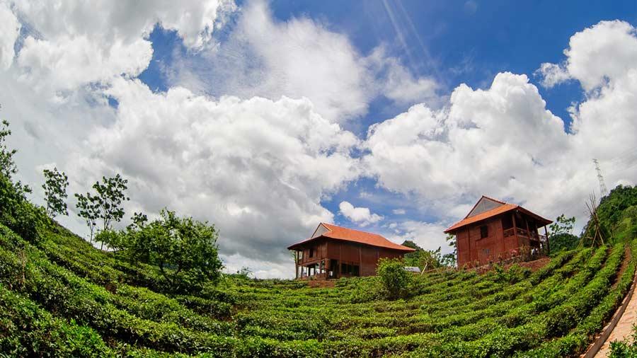 Những căn nhà sàn ấm cúng giữa đồi chè ngát xanh