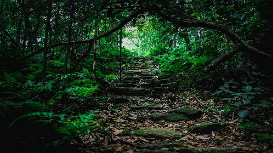 Con đường khám phá Vườn Quốc Gia Tam Đảo kì bí
