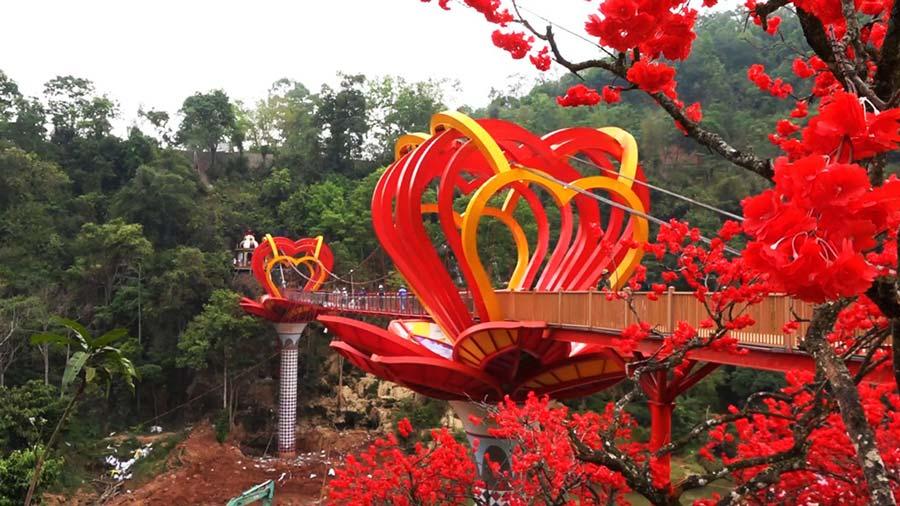 Chiêm ngưỡng sắc hoa tuyệt đẹp trên cầu kính Mộc Châu