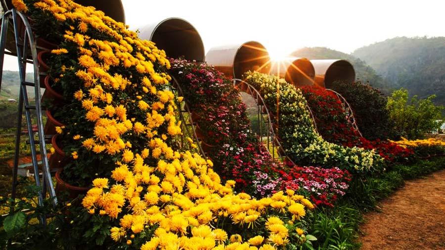 Vườn hoa tại Happy Land Mộc Châu tuyệt đẹp