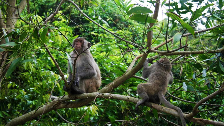 Tham quan những động vật quý hiếm tại Vườn Quốc gia Cúc Phương