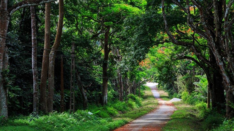 Vườn Quốc gia Cúc Phương bình yên, trong lành