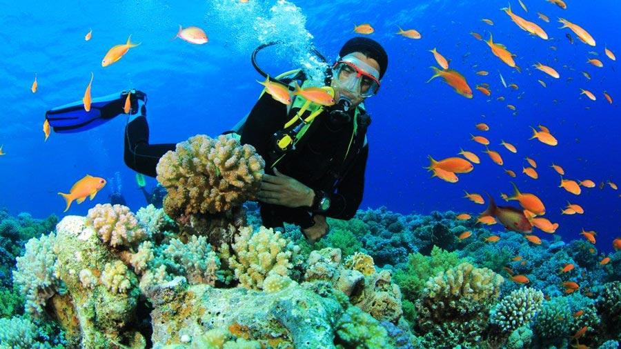 Lặn biển ngắm san hô là trải nghiệm tuyệt vời khi đến với Cô Tô Park