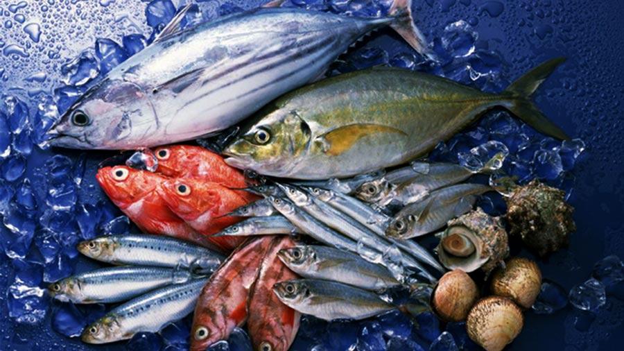 Cá biển luôn là hải sản được du khách săn đón mỗi dịp đến với Hải Tiến
