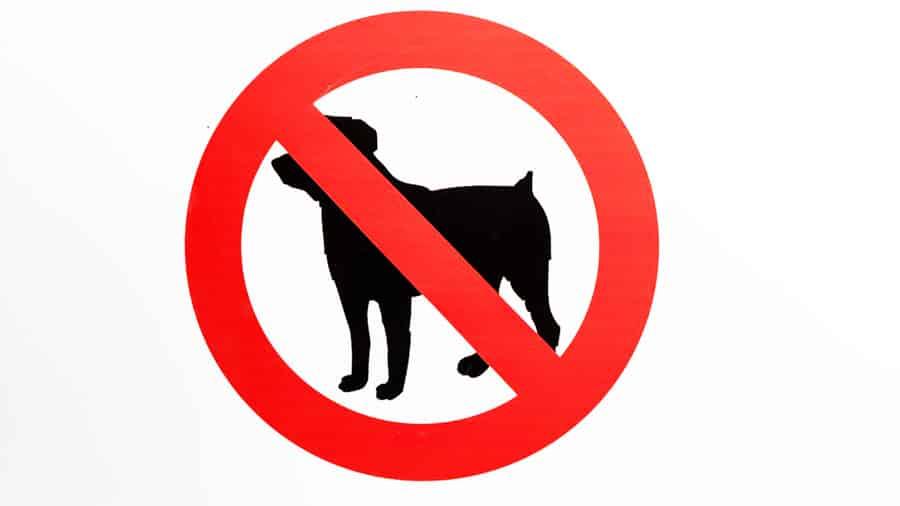 Không được phép mang theo vật nuôi đến khuôn viên khách sạn