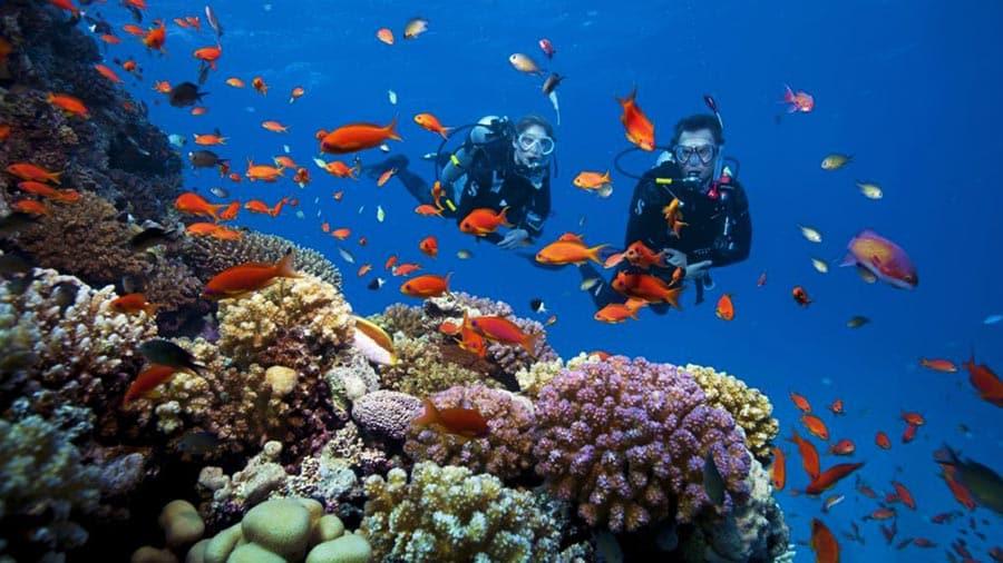 Khách sạn có trang thiết bị phục vụ lặn biển ngắm san hô