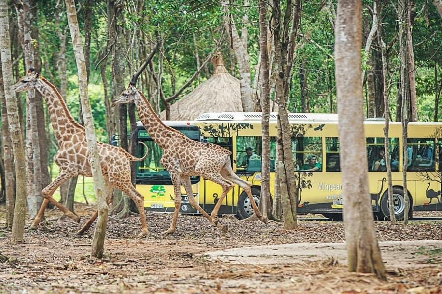Safari Park - trải nghiệm cảm giác người nhốt, động vật tự do