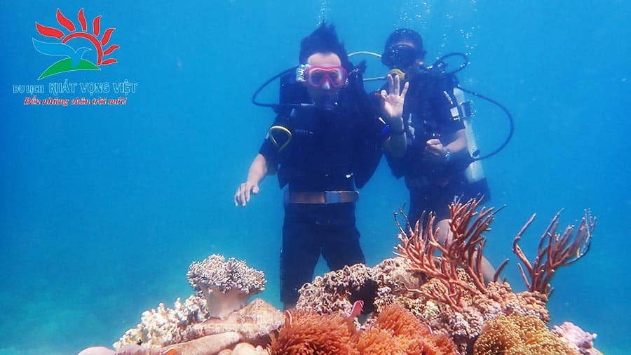 Lặn biển ngắm san hô và cá biển