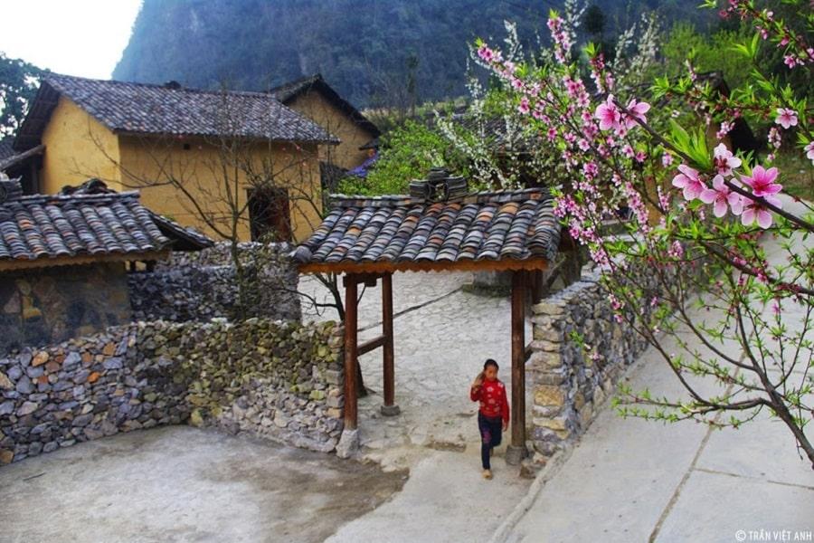Nhũng nếp nhà hòa quyện với sắc hoa làm say đắm lòng người tại Hà Giang