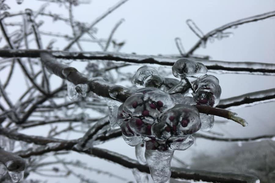 Nhiệt độ xuống thấp làm đóng băng cả cây cỏ