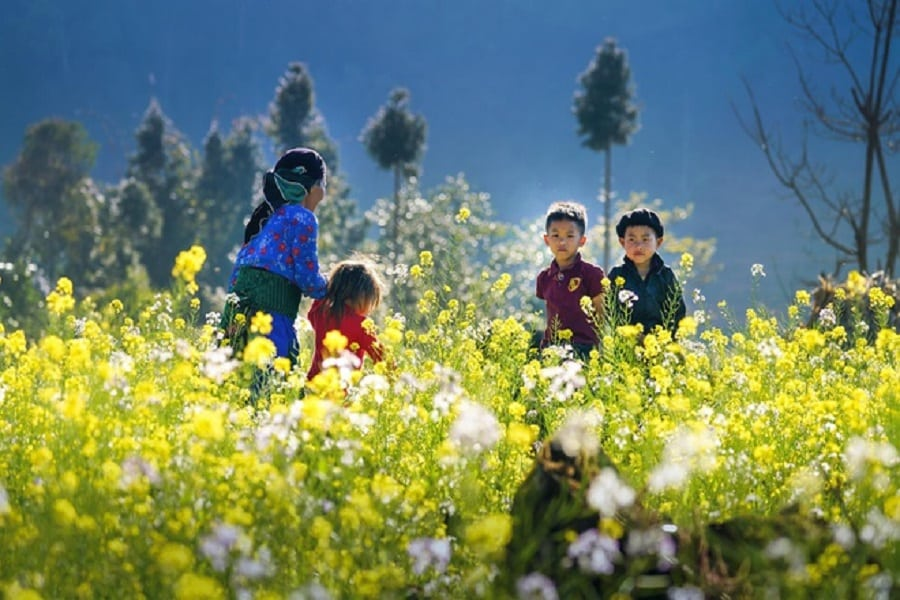 Cải vàng rực rỡ cuối đông tại Hà Giang