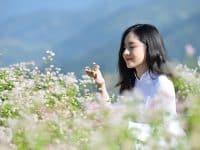 Check-in hoa tam giác mạch ở Lũng Táo