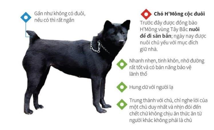 Đặc tính chó Mông cộc