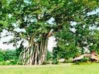 Di tích Tân Trào - di tích lịch sử văn hóa nổi tiếng tại Tuyên Quang