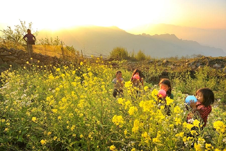 Sắc vàng của hoa cải vào những tháng đầu năm tao nên nét đẹp khó quên tại Hà Giang