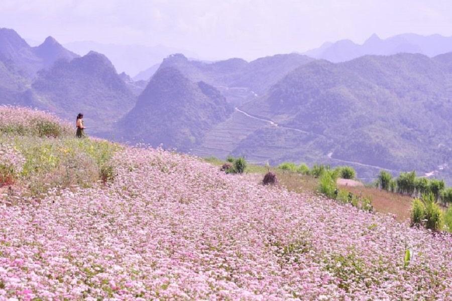 Mùa đông là thời gian để bạn có thể có những bức hình tuyệt đẹp tại những cánh đong hoa rực rỡ khi đến Hà Giang