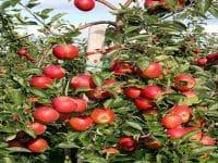 Thực hư và táo đá tịa Hà Giang