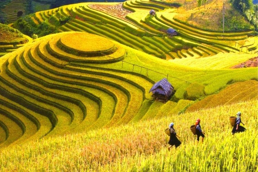 Hoàng Su Phì - ruộng bậc thang đẹp nhất Việt Nam