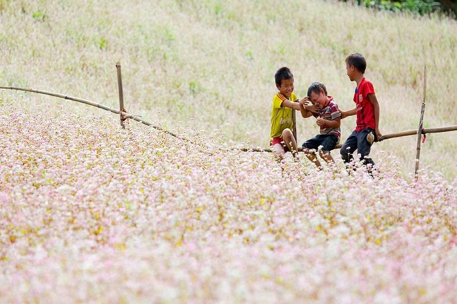 Mùa hoa tam giác mạch nở rộ ở Hà Giang
