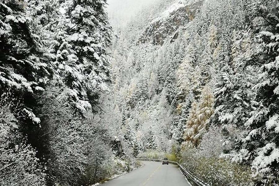 Khung cảnh tuyết rơi phủ kín nhưng tán cây hai bên đường