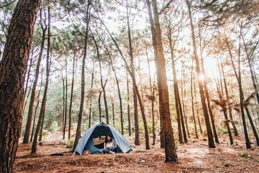 Rừng thông Yên Minh là địa điểm lý tưởng để cắm trại