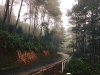 Cung đường di chuyển vào rừng thông Yên Minh