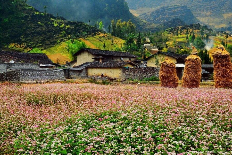 Thung lũng Sủng Là - nơi đá nở hoa
