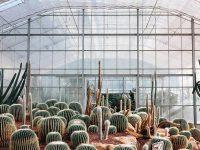 Khám phá vườn xương rồng Ba Vì – địa điểm sống ảo cực chất
