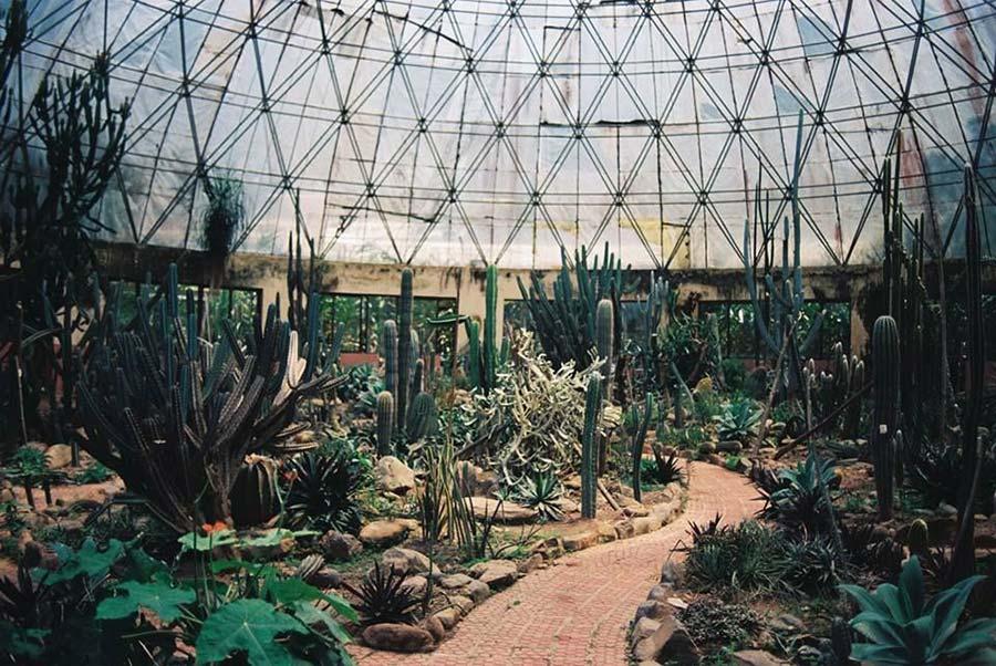 Vườn xương rồng là địa điểm du lịch hấp dẫn ở Ba Vì