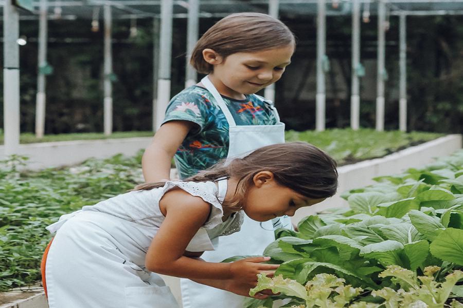 Vườn Organic garden