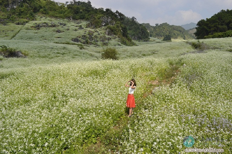 Lên Thung Cuông ngắm hoa cải nở trắng trời.