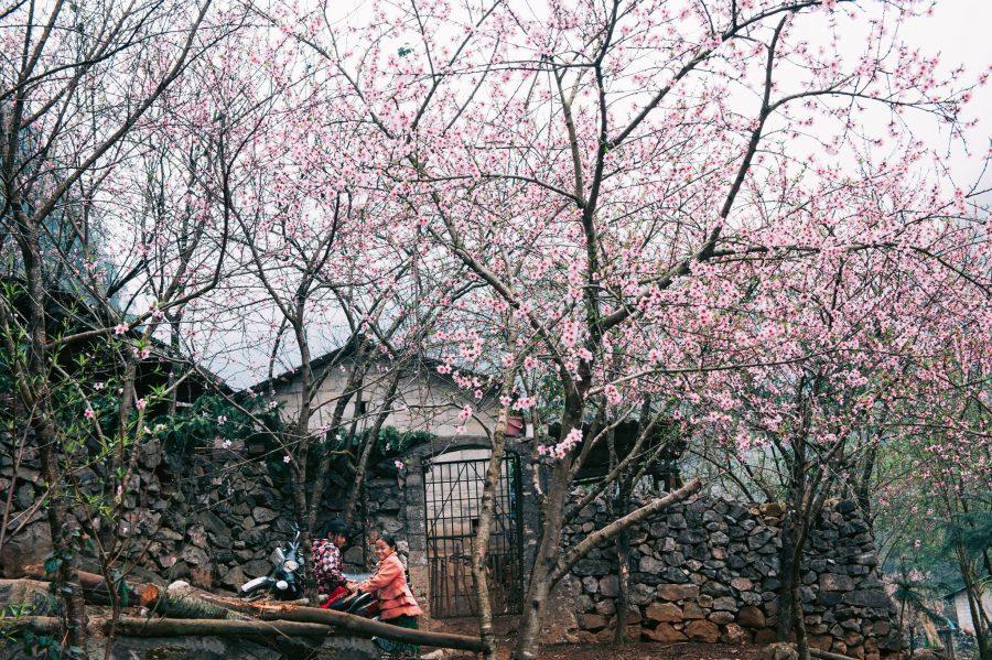 Mùa hoa đào ở Hà Giang đẹp đến nao lòng