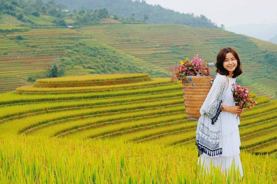 Hà Giang mùa lúa chín tuyệt đẹp