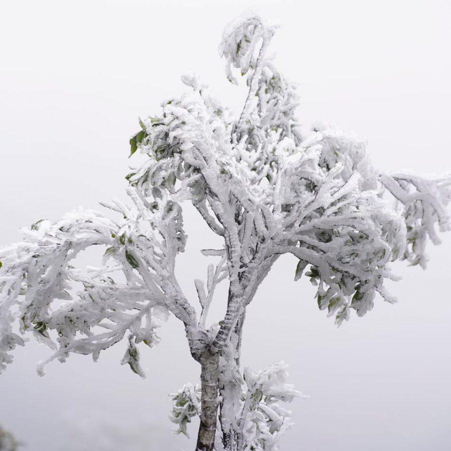 Cây cối được tuyết bao phủ tạo lên những hình thù đẹp mắt