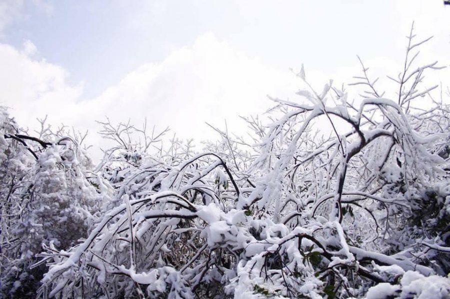 Cây cối như ngưng đọng với thời gian vì được bao phủ lớp băng lạnh giá