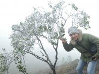 Tuyết Bình Liêu