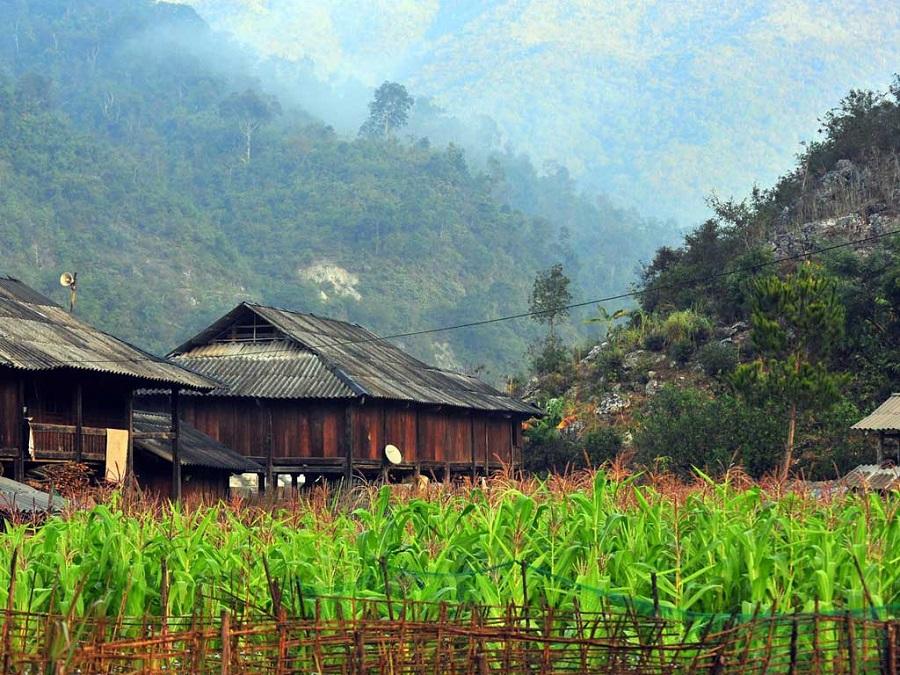 Bản Thái yên bình dưới chân đồi Khau Phạ là điểm đến hấp dẫn