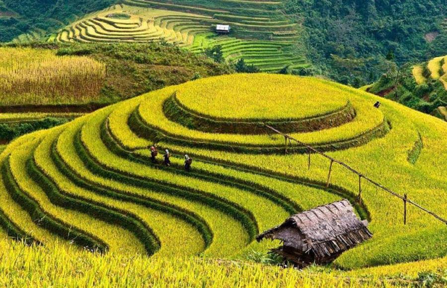Mâm xôi homestay là điểm lưu trú hút khách du lịch