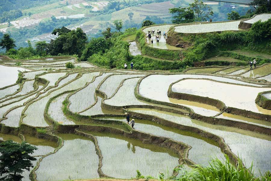 Thửa ruộng bậc thang trong mùa cấy lúa