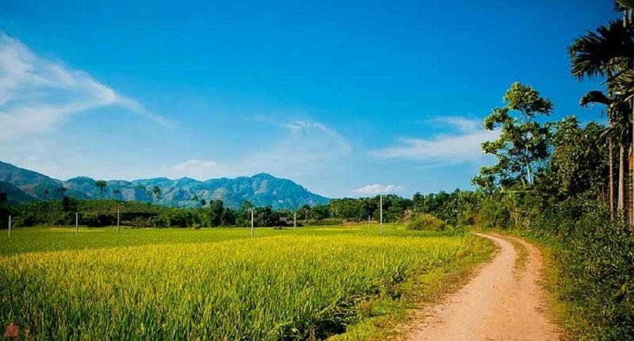 Từ Tuyên Quang đi Na Hang bạn sẽ được băng qua những cánh đồng lúa bạt ngàn