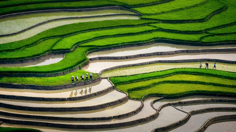 Du lịch Mù Cang Chải mùa nước đổ