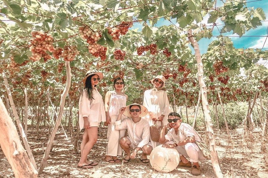Khám phá vườn nho Ninh Thuận