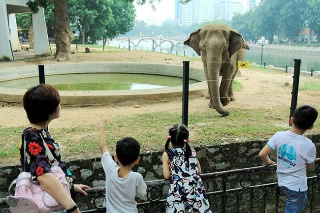 Quan sát động vật trong tự nhiên với khoảng cách gần