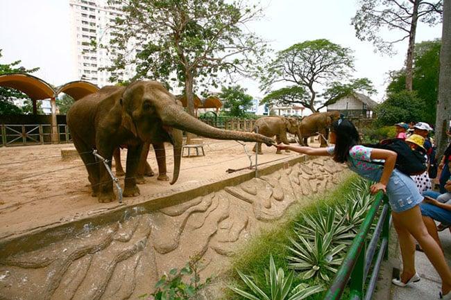 Tham quan vườn thú có lịch sử lâu đời tại Hồ Chí Minh