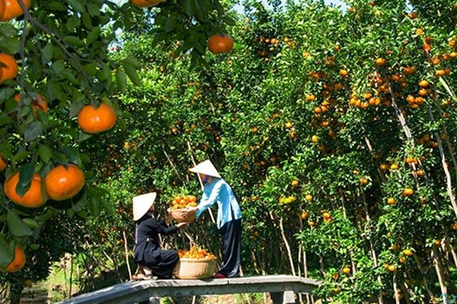 Miền Tây gắn liền với nhiều loại trái cây miệt vườn