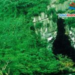 Những kinh nghiệm du lịch Quảng Bình chia sẻ đầy đủ từ A-Z